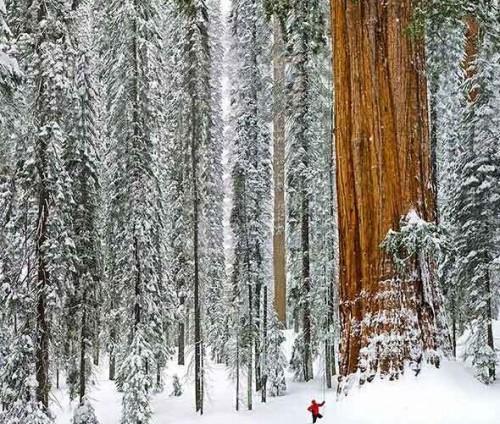 18张世界上最奇特最美丽的树木